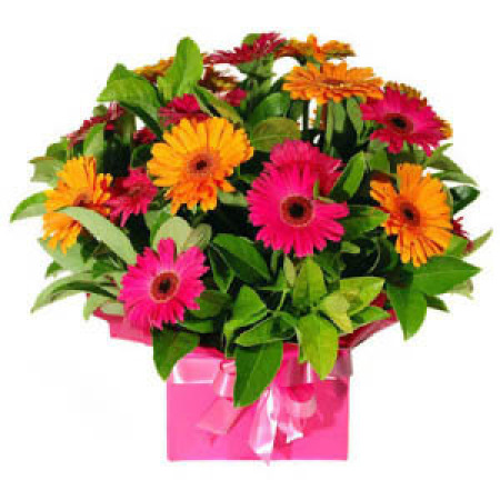 BI 03 - Bright Gerbera Box